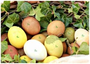 Färbung der Eier